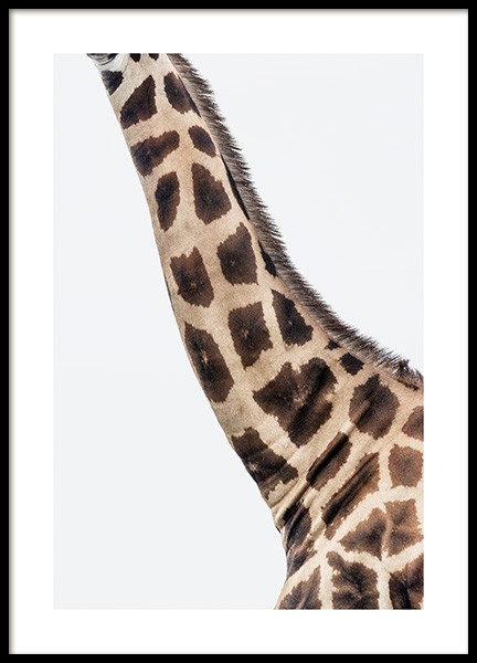 Giraffe Neck Poster in the group Prints / Animals / Wild animals / Giraffes at Desenio AB (14576)
