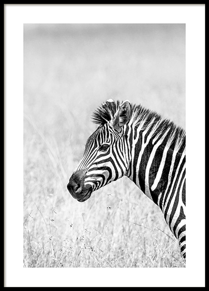 Zebra in the Grass Poster in the group Prints / Animals / Wild animals at Desenio AB (14582)