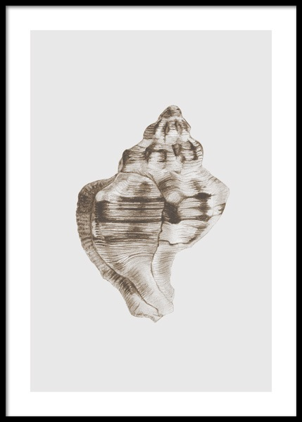 Whelk Shell Poster in the group Prints / Art prints at Desenio AB (14706)