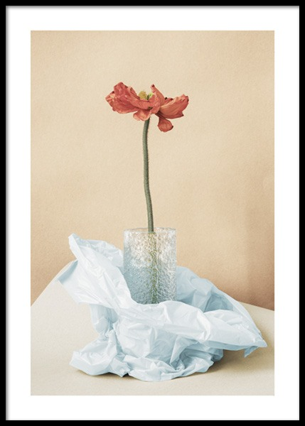 Still Red Poppy Flower Poster in the group Prints / Botanical / Flowers at Desenio AB (14720)