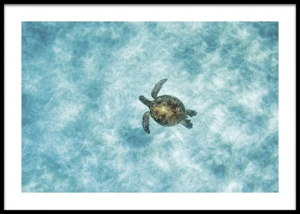 Green Sea Turtle Poster in the group Prints / Animals at Desenio AB (14781)
