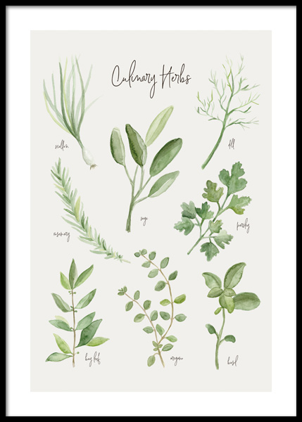 Summer Herbs Poster in the group Prints / Kitchen / Kitchen guides at Desenio AB (14839)