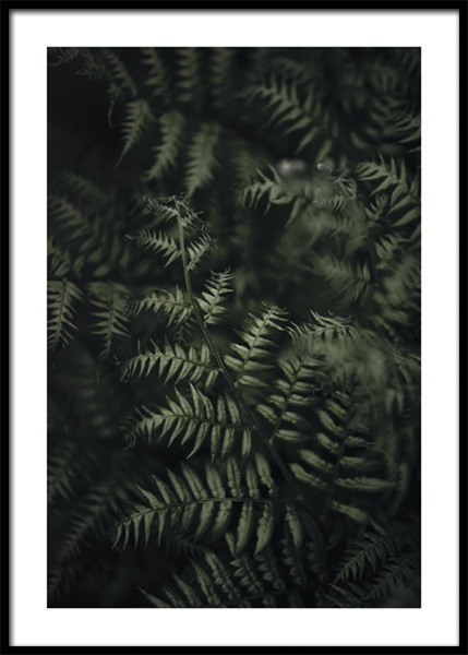 Green Fern Poster in the group Prints / Photographs at Desenio AB (15014)