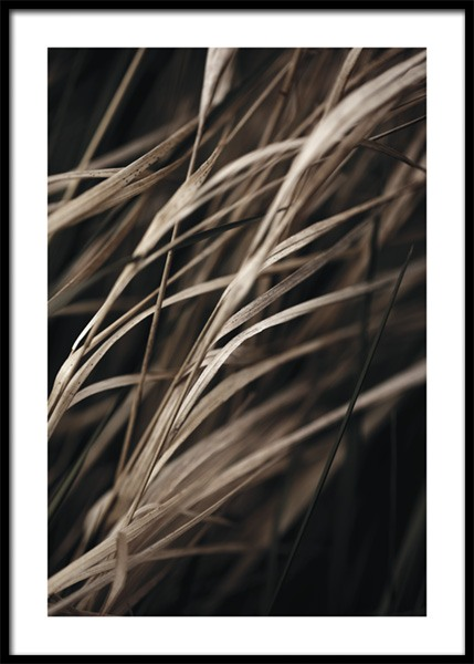 Brown Reeds Poster in the group Prints / Photographs at Desenio AB (15030)