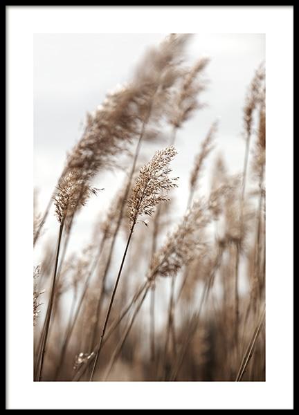 Swaying Reeds No1 Poster