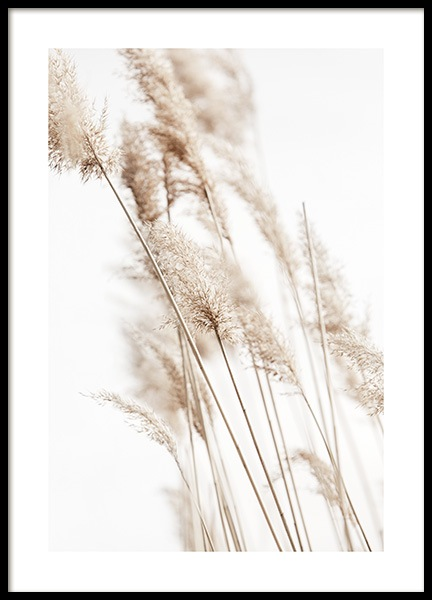 Sunny Reeds No2 Poster