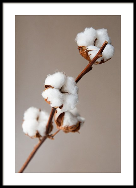 Cotton Flower Poster