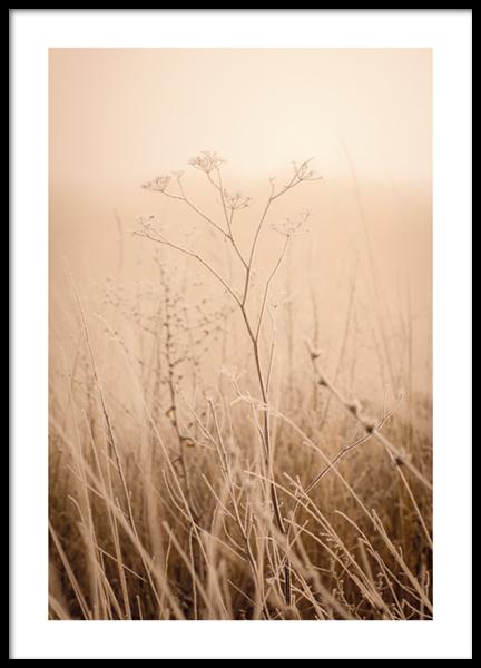 Morning Fog Poster