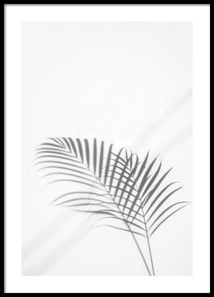 Palm Leaf Shadow Poster