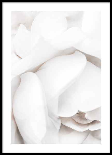 White Rose Petals Poster