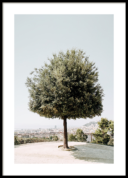 Tree in Naples Poster
