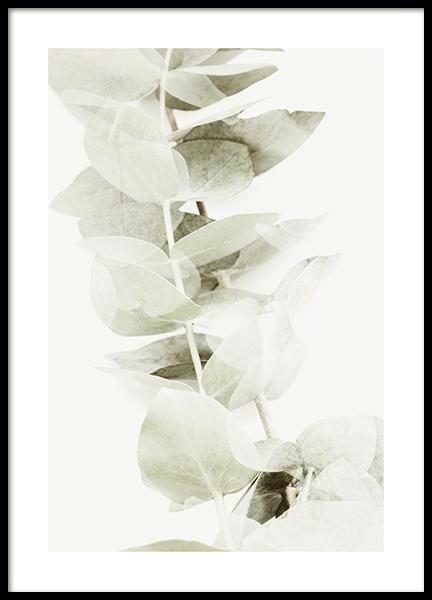 Abstract Eucalyptus No2 Poster