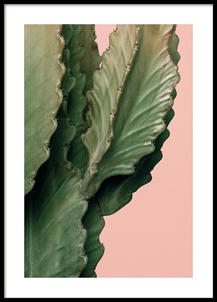 Pink Cactus Detail Poster