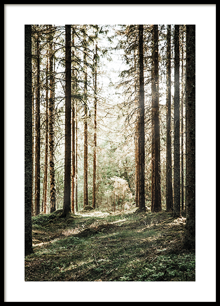 Forest Grove Poster