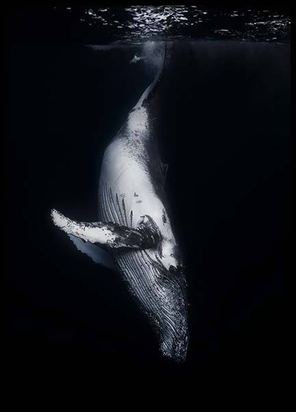 Whale 1 Poster in the group Prints / Photographs at Desenio AB (2082)