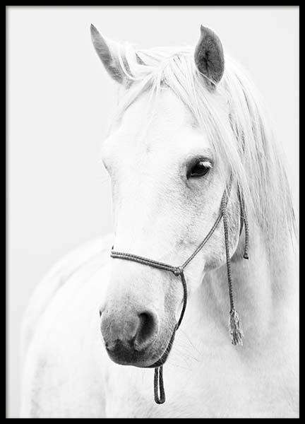 White Horse  Poster in the group Prints / Animals at Desenio AB (2218)