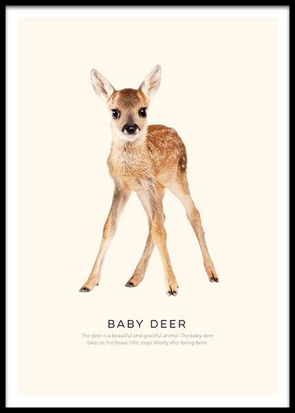 Baby Deer Poster in the group Prints / Animals at Desenio AB (2270)