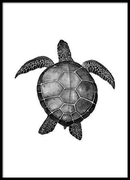 Turtle Poster in the group Prints / Animals at Desenio AB (2271)