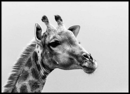 Giraffe Poster in the group Prints / Sizes / 50x70cm | 20x28 at Desenio AB (2272)