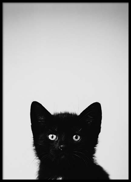 Black Kitten Poster in the group Prints / Kids at Desenio AB (2301)