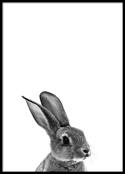 Grey Bunny Poster in the group Prints / Animals at Desenio AB (2302)