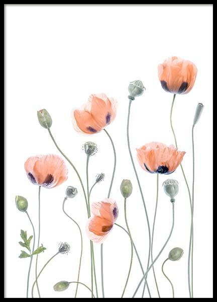 Poppies 2 Poster in the group Prints / Floral at Desenio AB (2324)