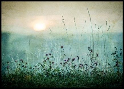 Meadow In Dawn Poster in the group Prints / Nature at Desenio AB (2327)
