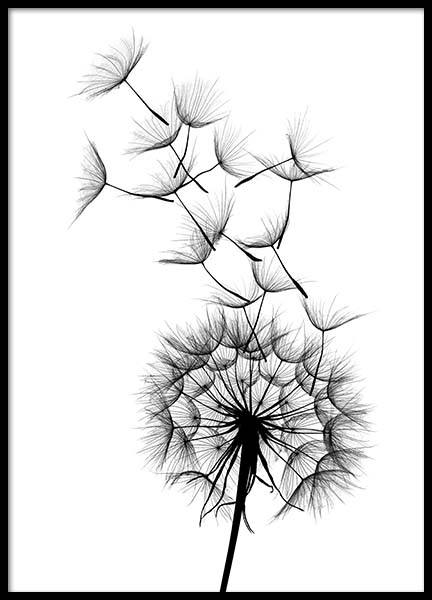 Dandelion No2 Poster in the group Prints / Black & white at Desenio AB (2393)