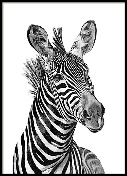 Zebra Black And White Poster in the group Prints / Animals at Desenio AB (2400)