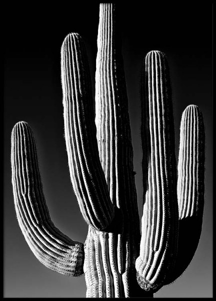 Dark Cactus Poster in the group Prints / Black & white at Desenio AB (2432)