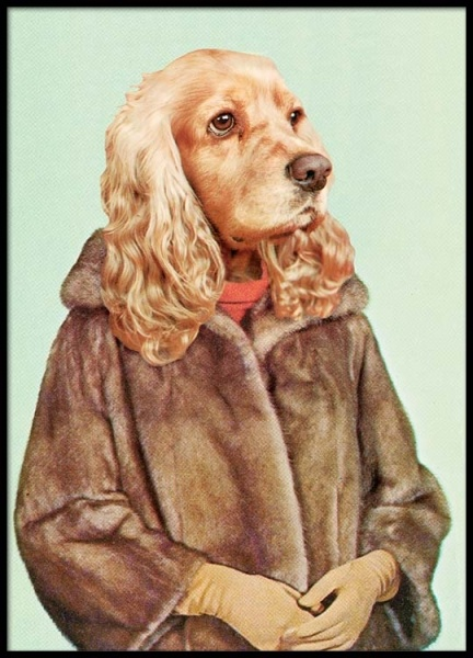 Lady Dog Poster in the group Prints / Sizes / 50x70cm | 20x28 at Desenio AB (2442)