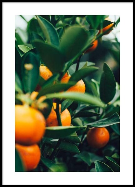 Orange Tree One Poster in the group Prints / Photographs at Desenio AB (2469)