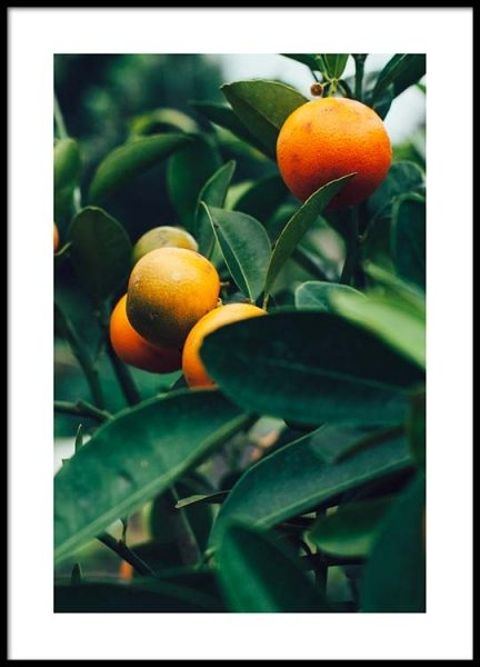 Orange Tree Two Poster in the group Prints / Photographs at Desenio AB (2470)