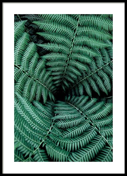 Ferns Poster in the group Prints / Sizes / 50x70cm | 20x28 at Desenio AB (2551)