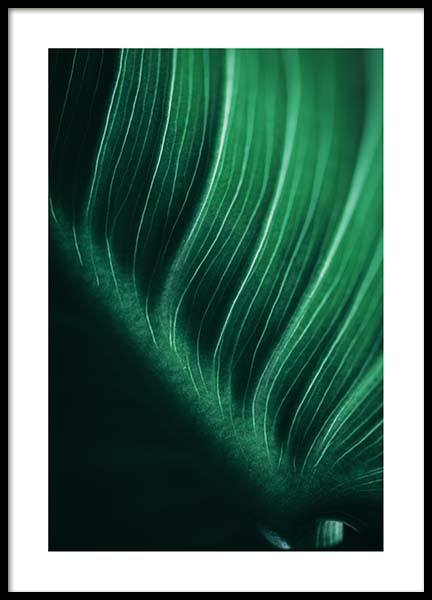 Leaf close up Poster in the group Prints / Sizes / 50x70cm | 20x28 at Desenio AB (2552)