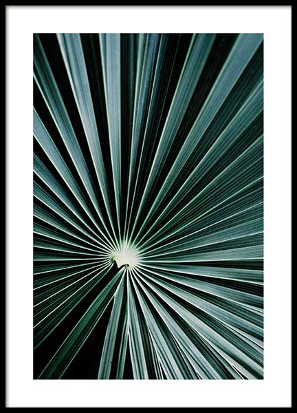 Dark Green Palm Poster in the group Prints / Photographs at Desenio AB (2554)
