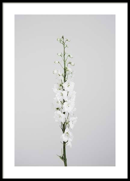 White delphinium Poster in the group Prints / Sizes / 50x70cm | 20x28 at Desenio AB (2696)
