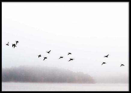 Birds Over Lake Poster in the group Prints / Nature prints at Desenio AB (2723)