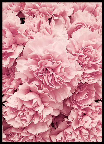 Peonies Poster in the group Prints / Floral at Desenio AB (2724)