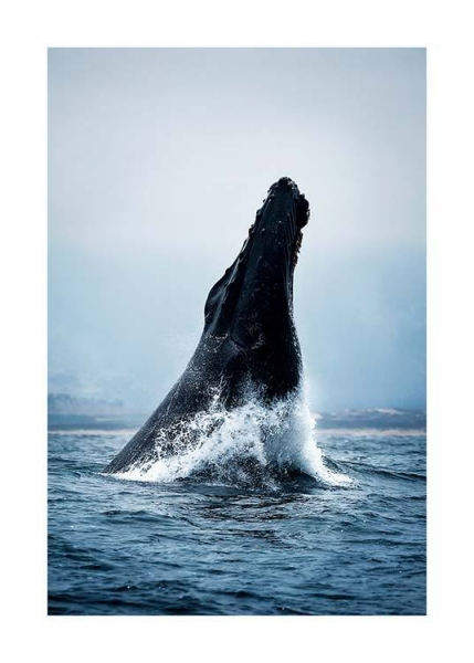 Humpback Jump Poster in the group Prints / Animals at Desenio AB (2728)