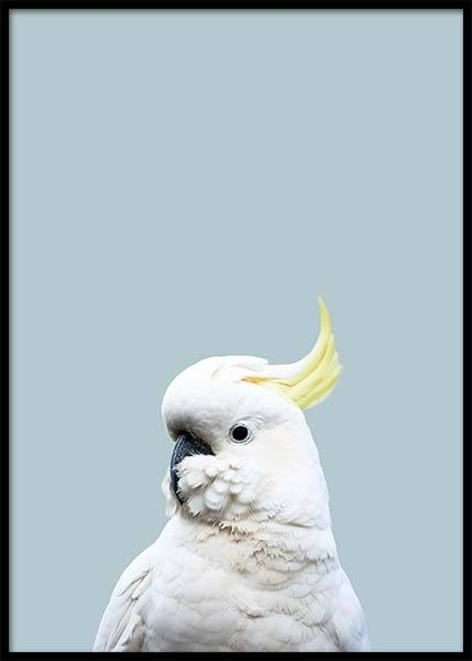 White Cockatoo Poster in the group Prints / Animals at Desenio AB (2731)
