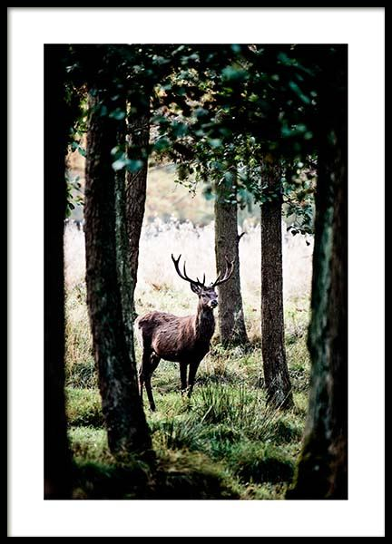 Stag In Forest Poster in the group Prints / Nature at Desenio AB (2743)