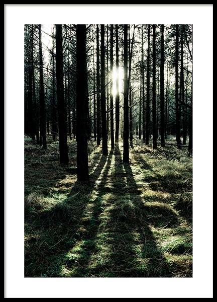 Sunlight In Forest Poster in the group Prints / Nature at Desenio AB (2744)