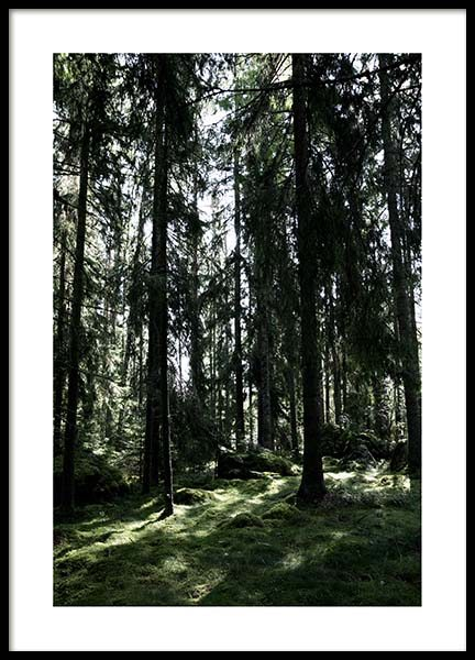 Forest trees Poster in the group Prints / Sizes / 50x70cm | 20x28 at Desenio AB (2745)