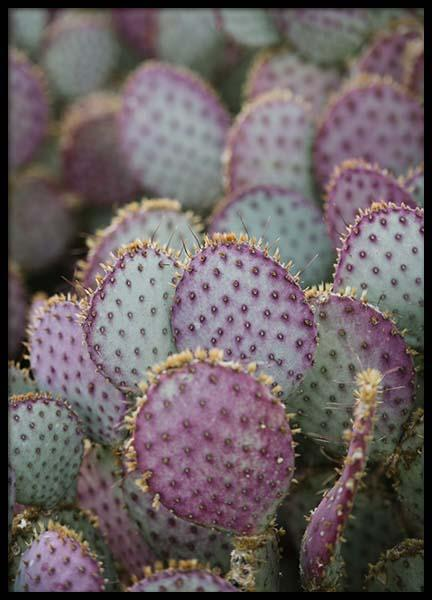 Pink Opuntia Poster in the group Prints / Floral at Desenio AB (2817)