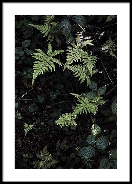 Wild Fern Poster in the group Prints / Floral at Desenio AB (2828)