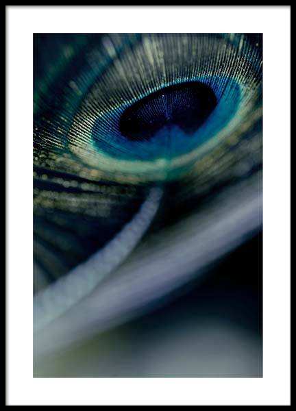 Peacock Feather Close Up Poster in the group Prints / Photographs at Desenio AB (2860)