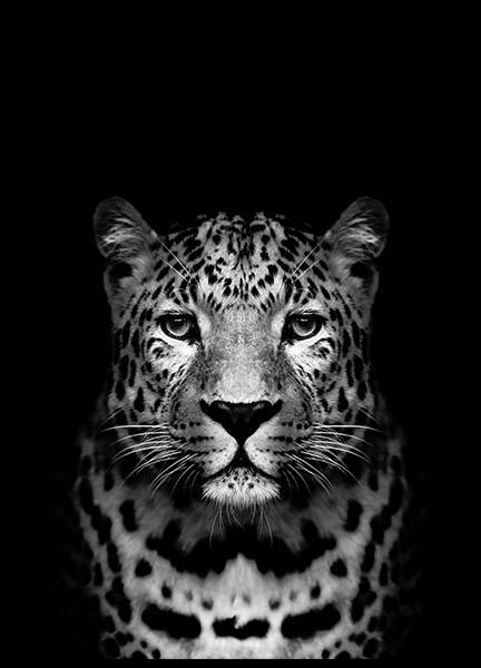 Leopard B&W Poster in the group Prints / Black & white at Desenio AB (2912)