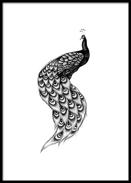 Peacock Illustration Poster in the group Prints / Illustrations at Desenio AB (2925)