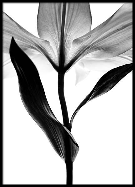 Lily Monochrome Two Poster in the group Prints / Black & white at Desenio AB (2937)